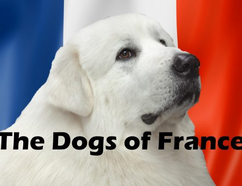 The Ultimate Guide – Dogs of the World – France