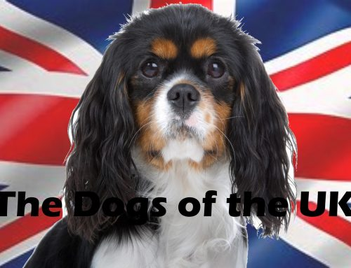 The Ultimate Guide – Dogs of the World – England and the UK