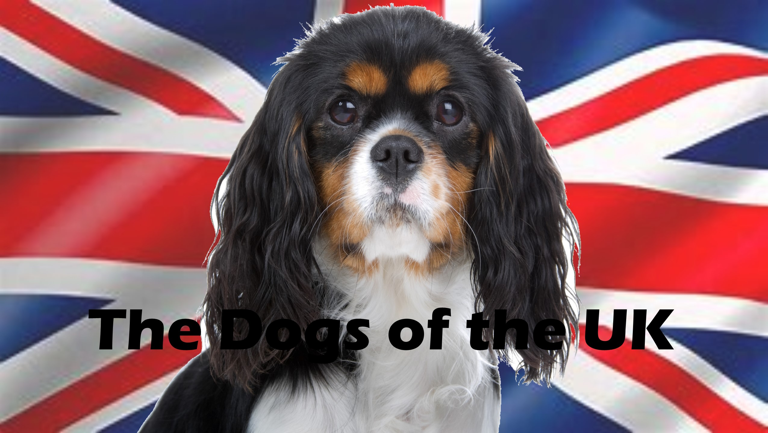 Dogs of the UK