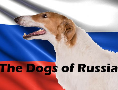 The Ultimate Guide – Dogs of the World – Russia